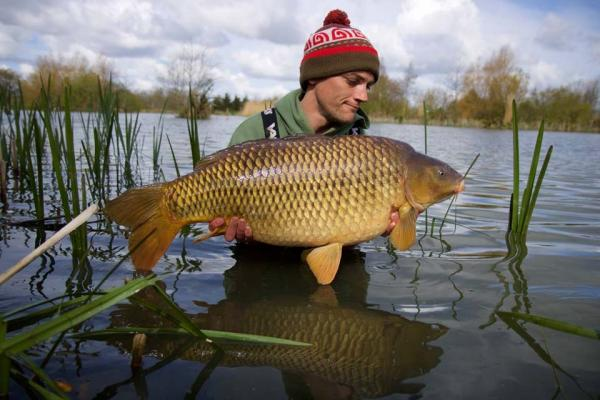 Mint Common 30lb 14oz