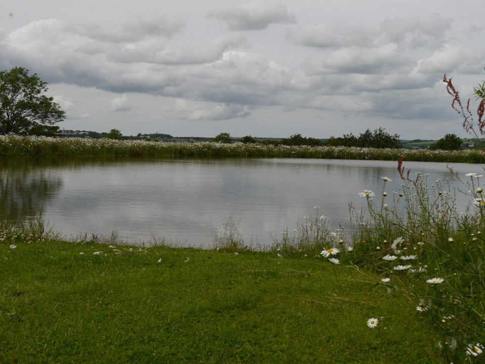 Willow pool at Furzebray